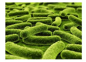 Mycobacterium DNA Isolation Kit