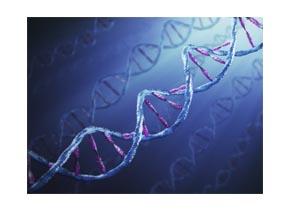 Genomic DNA Isolation From Tissue