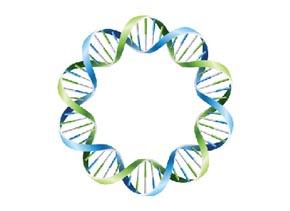 Plasmid DNA Isolation